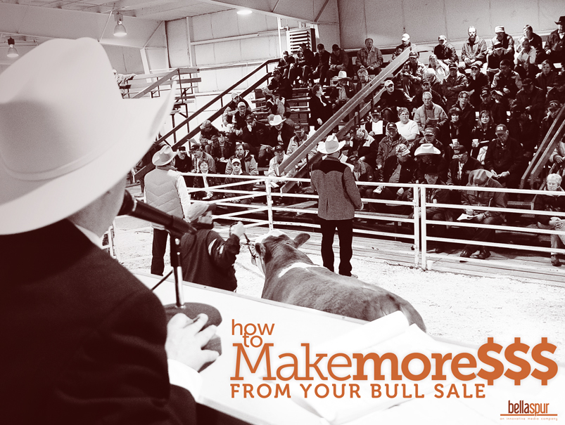 make more money from bull sale